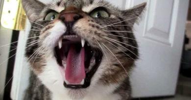 котка като оръжие