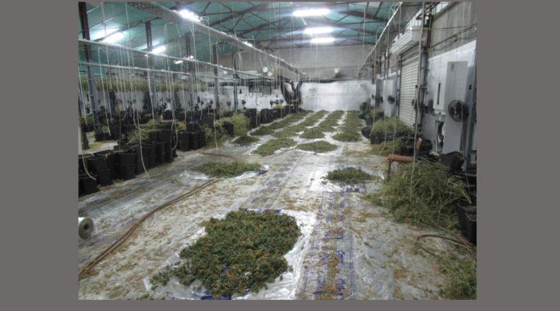 оранжерия марихуана в Русе